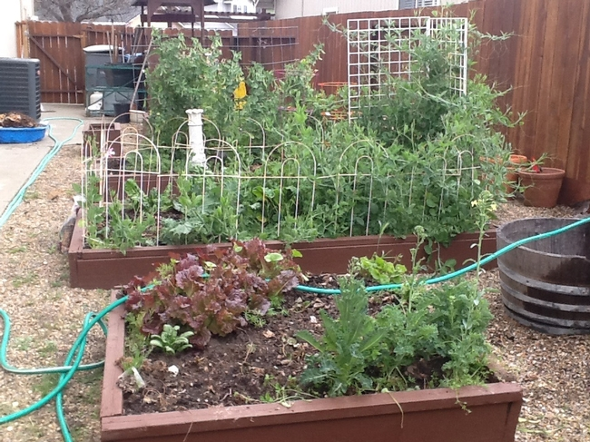 Raised bed riches. (photos by Cheryl Potts)