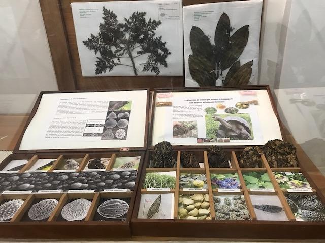 Charles Darwin Seeds