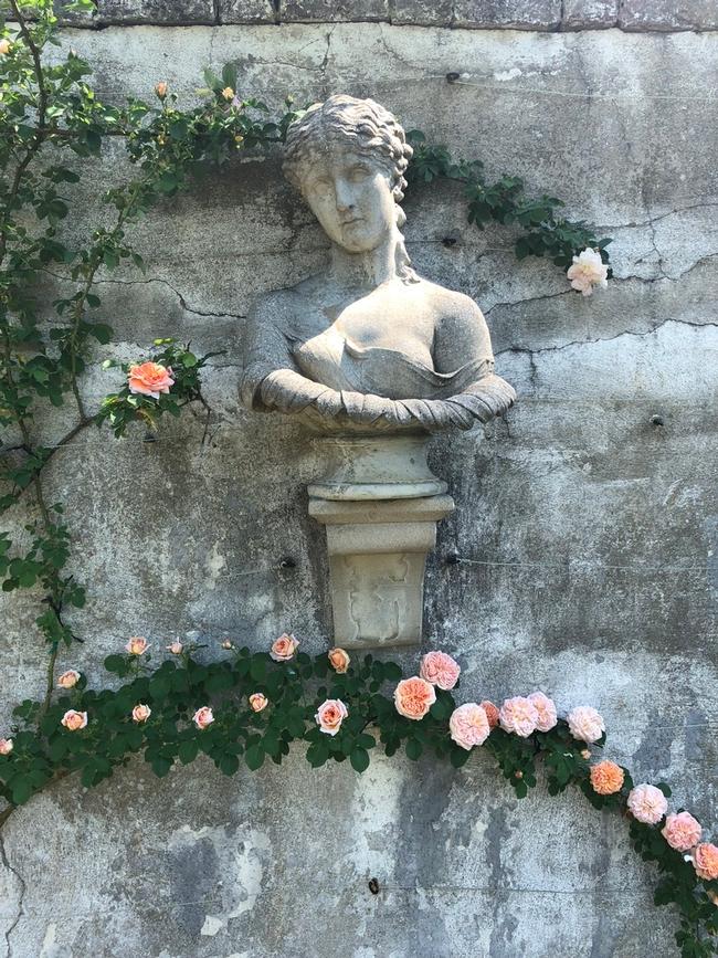 'Alchemist' rose