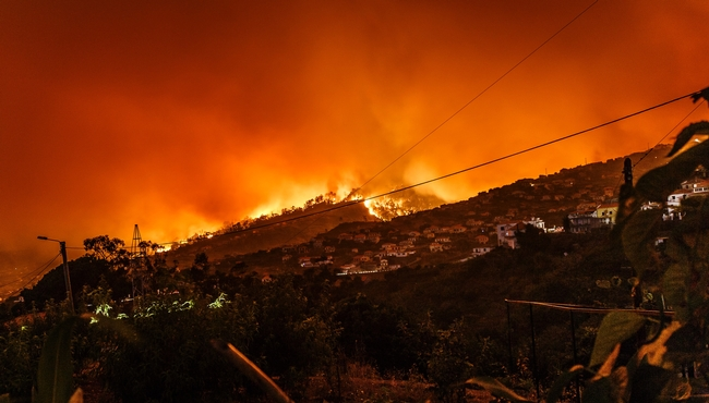 Wildfire advancing down a hillside