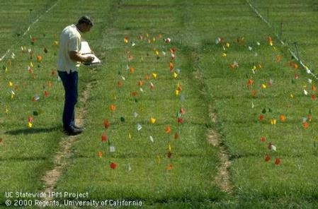 UC researcher taking notes at turf research plot. Photo by Jack Kelly Clark.