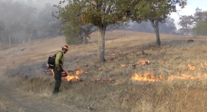Prescribed burning team 9