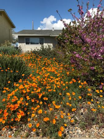 California Friendly Gardening 12