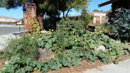 California Friendly Gardening 13