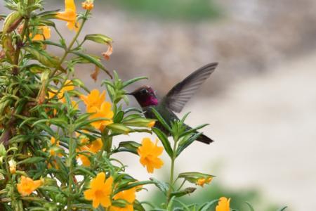 California Friendly Gardening 17