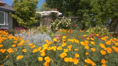 California Friendly Gardening 29