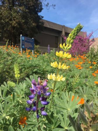 California Friendly Gardening 39