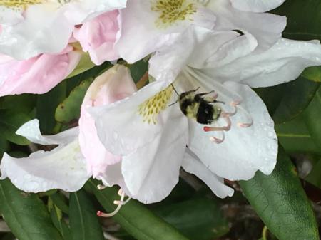 Creatures in the Garden 79