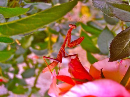 Creatures in the Garden 106