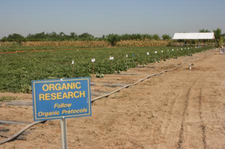Organic fields at Kearney