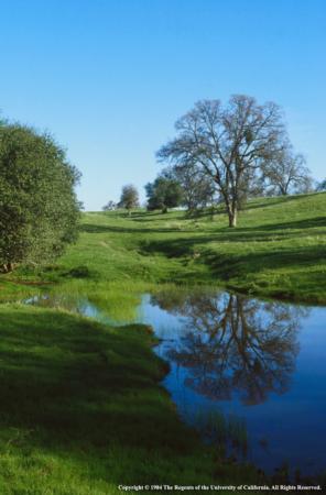 Oaks, Grassy Hillside and Pond