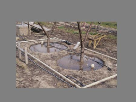 Basin irrigation used with Crimson Lady peach trees in weighing lysimeter