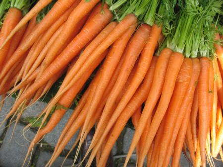 Fresh Carrots with Leafy Tops
