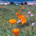 California Friendly Gardening 31