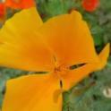 California Friendly Gardening 44