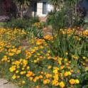 California Friendly Gardening 50