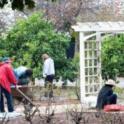 UC Master Gardener in Action 31