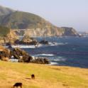Cattle by the coast