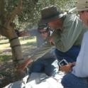 Experimental Olive Harvest: Inspection of trunk injury