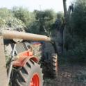 Mechanical olive pruning: Hedging proceeds