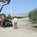 Mechanical olive pruning: The arm wil be adjusted to top the trees at 12 feet