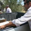 Experimental olive harvest: Loading samples