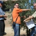 Experimental olive harvest: Bill, Sergio and Uriel collect hand-harvested samples