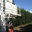 Experimental olive harvest: The Collossus moves down the row