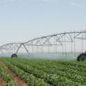 One of the several center pivot irrigation systems in operation at Farming 'D' in Five Points, Calif.