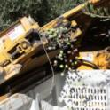 Erick Neilsen Enterprises trunk-shaking harvester in olive orchard: olives into the bin