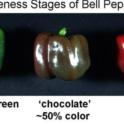 Ripeness Stages