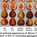 Temperature and CA Effects on Brown Turkey Figs