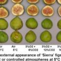Temperature and CA Effects on Sierra Figs