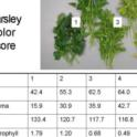 Parsley Color Scores & Pigments