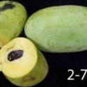 Pawpaw genotype #2-7