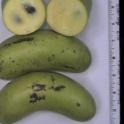 Pawpaw genotype #G4-17