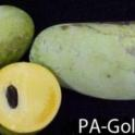 Pawpaw genotype (PA-Golden)
