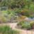 California Friendly Gardening 9