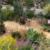 California Friendly Gardening 37