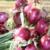 Organic onions at farmers market