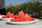 Watermelon tasting 2