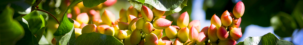 2012 Advances in Pistachio Production Short Course
