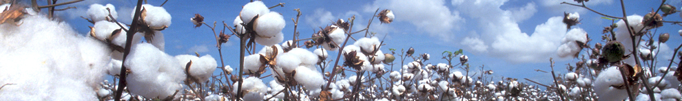 California Cotton Production Information