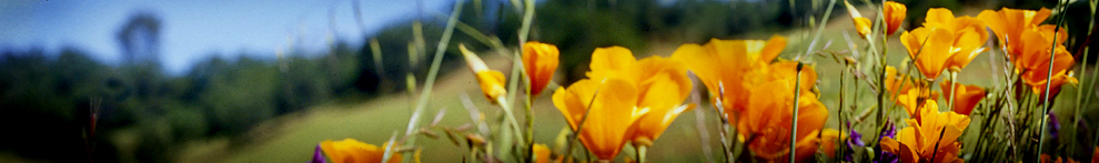 UC Master Gardener Program of Contra Costa County