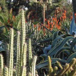 The Desert Garden at the Huntington