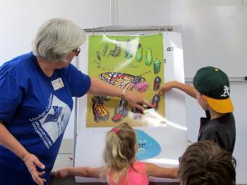 Joan butterflies Little Wonders for Kids class 17