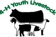 4-H-Youth-Livestock
