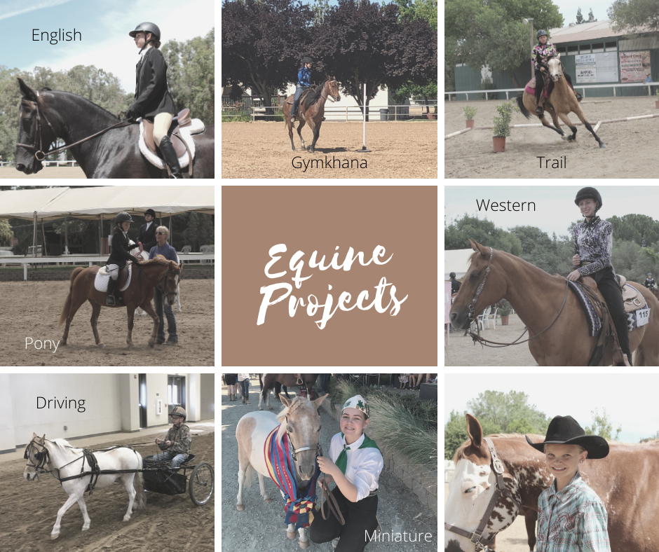 A wide variety of horse projects: Breeding, Draft, Drill, Driving, English, Western, Gymkhana, Judging, Miniature, Trail, Pony