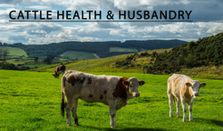 Cattle Health and Husbandry