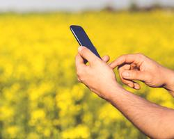 man-field-smartphone-yellowCROP